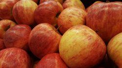 produkcja jabłek i gruszek
