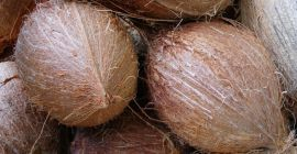 i will sell Semi Husked Coconut from Germany, (whatsapp:+4565744605)