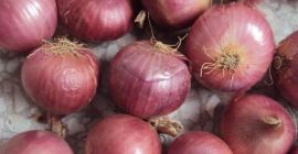 we have fresh harvest of red and yellow onion,