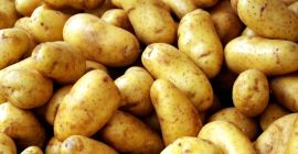 we have fresh harvest of Potatoes,